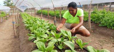 Una pequeña cobertura favorece a los cultivos de hortalizas y verduras de las fuertes lluvias. La producción es constante y de mayores cantidades por metro cuadrado.