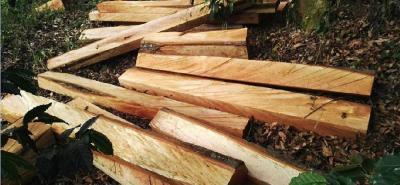 Se estima que en las próximas horas la Fiscalía efectúe la captura de por lo menos cinco personas más que estarían vinculadas al cartel para la tala y tráfico ilegal de madera.