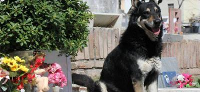 Murió el perro que vivió 10 años sobre la tumba de su amo