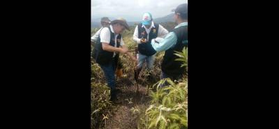 Según la Secretaría de Agricultura municipal, la CAS afirmó que este predio cuenta con todos los requisitos para ser adquirido, aislado y declarado como zona estratégica de recarga hídrica.