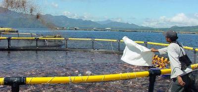 Con el embalse de Tocoporo, Santander es estimado por las autoridades acuícolas del país como una de las potencias productoras de peces en cautiverio a corto plazo.