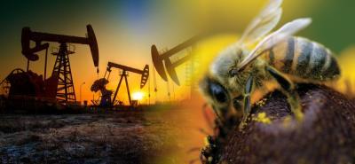Proponen usar abejas para medir contaminación por hidrocarburos en Santander