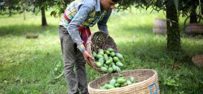 Los pequeños y medianos productores demandaron créditos por más de $1.5 billones para el desarrollo de sus proyectos.
