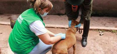 En el último trimestre se  han organizado dos jornadas de vacunación, adopción y recaudo de alimentos y ayudas para las mascotas.