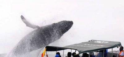 Comenzó la temporada de avistamiento de ballenas