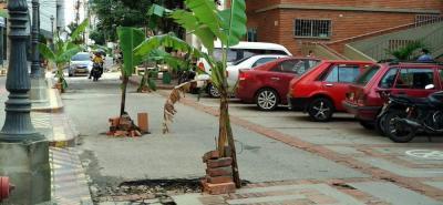 Una protesta simbólica se 'plantó' ayer en el Paseo España. Tras el deterioro de la vía, los vecinos adecuaron en cada hueco de la vía una planta de plátano.