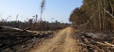 En 2017 aumentó la deforestación en un 23% en Colombia