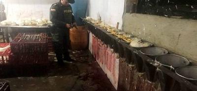 Durante el operativo se hallaron 100 pollos sacrificados y 250 más en pie que ya estarían listos para el procedimiento.