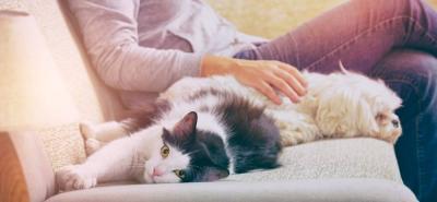 ¿Tiene o está pensando en tener una mascota? ¡Tenga en cuenta estas recomendaciones!