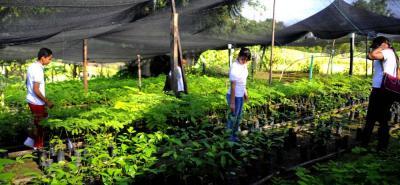 En las áreas agropecuarias, los ciudadanos podrán educarse con el Sena.