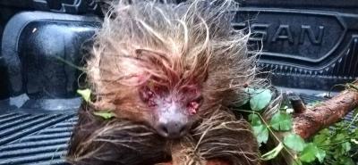 Brutal caso de agresión contra un perezoso en Santander