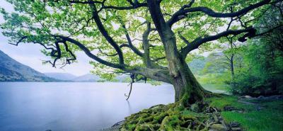 Cuestión de raíces