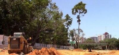 Este fue el destino de los árboles trasladados de La Normal de Bucaramanga