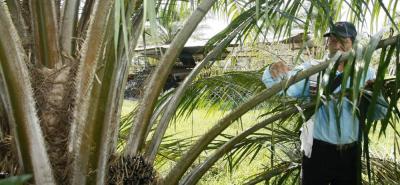El Paisaje Palmero Biodiverso, PPB, es el primer proyecto financiado por el Fondo Global para el Medio Ambiente, GEF.