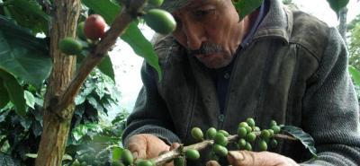 Colombia, el primer productor mundial de café arábigo lavado, espera una cosecha de alrededor de 14 millones de sacos. Esa misma cantidad se recolectó en 2017.