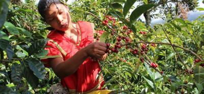 Los cafeteros esperan un Fondo de Estabilización de Precios, un programa de apoyo directo al precio y un plan de retención de café para no saturar el mercado y palear la crisis.