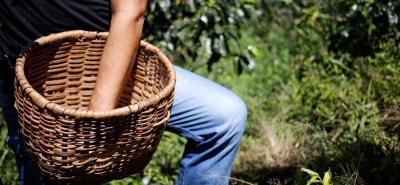 La caída de los precios del café afectan de manera directa a 540 mil familias colombianas que viven de esa actividad.