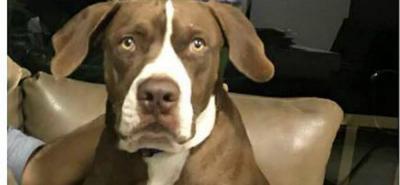 Si tiene alguna información del paradero de este can comuníquese al 320 2117492.