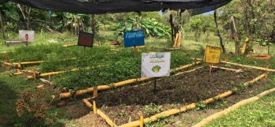 La huerta orgánica del Colegio Siglo XXI ya les ha dejado cosechas de zanahoria, lechuga y plantas aromáticas.