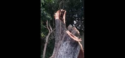 Según la queja ciudadana, varios árboles tiene el mismo hongo que afectó al que se cayó en la vía pública.