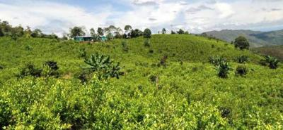 Las zonas con mayor concentración de cultivos de coca están asociadas a zonas de frontera
