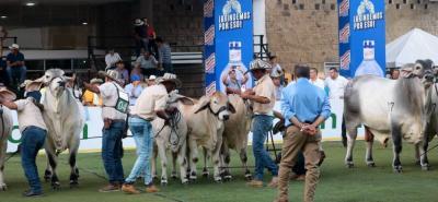 Los primeros juzgamientos se dieron ayer en Cenfer, en el marco de la 69 Feria Ganadera de Bucaramanga.