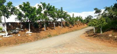Esta es la apariencia actual de la zona intervenida en Barichara. Aunque los árboles tardarán de 2 a 3 años en crecer y dar más sombra, ya se observa una mejora en el paisaje.