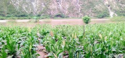 Represamiento del río Chicamocha inundó cultivos en Cepitá, Santander