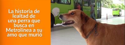 En honor a 'Pasajera', se diseñó un programa para crear conciencia sobre la protección  de las mascotas.