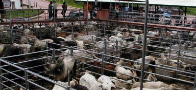 Hay fuertes medidas de control para la movilización de bovinos, como también para la realización de ferias ganaderas en el territorio nacional.