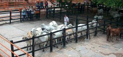 En el próximo ciclo de vacunación contra aftosa, en Santander se inmunizarían 1.500.000 bovinos y 48 mil bufalinos.
