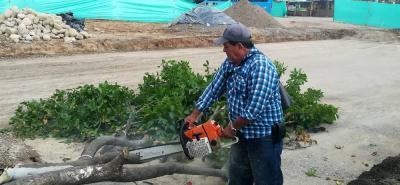 Las autoridades consultadas manifiestan no conocer al obrero que hizo la tala de árboles.