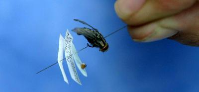 Según las autoridades, una posible causa de la aparición de moscas son los cambios climáticos.
