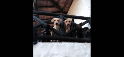 Las fundaciones 'Soy Animal' y Protección Animal Piedecuesta organizaron la II 'Tapatón, por los Peluditos' para recaudar fondos que permitan atender a las mascotas en situación de calle.