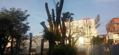 Hace más de 10 diez días inició la tala de los árboles que, actualmente, se reducen a unos simples troncos.