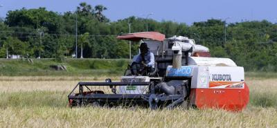 Los costos de producción de una hectárea de arroz en el país están por el orden de los $5 millones.