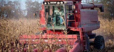 Las importaciones de maíz amarillo que llegan a Colombia vienen, principalmente, de los Estados Unidos y Argentina.