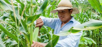 Para los analistas, gravar los insumos del agro es trasladarle ese nuevo costo a los potenciales consumidores; además, el sector perdería su frágil competitividad.