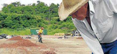 El mal manejo de poscosecha es uno de los factores que más incide en la calidad del cacao que se produce en el país.
