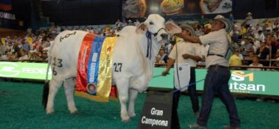 La Gran Campeona Gris de la raza brahman en la 71 Feria Nacional Cebú que se realiza en Cenfer, fue JB la Victtoriana, de propiedad de la hacienda la Vittoriana, en Montería, Córdoba.