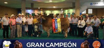 El Gran Campeón Brahman rojo de la 71 Feria Nacional Cebú fue Panorama Wellington Maxmill 929/6, de solo 25 meses y un peso de 962 kilos. Es de propiedad de Ricardo y Daniel Mantilla Habeych.