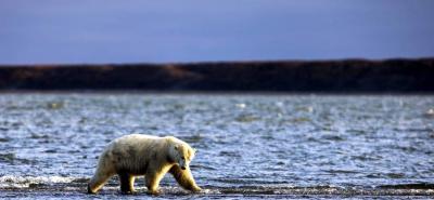 El Ártico registra los cinco años más cálidos en un siglo, según agencia de EEUU