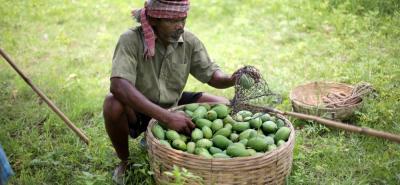 El Minagricultura dice que se busca una comercialización justa para el ordenamiento del sector agropecuario del país.