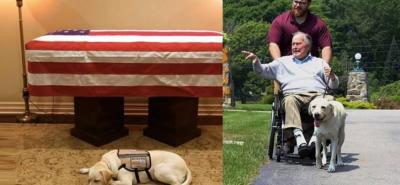 El animal acompañó al ex presidente de Estados Unidos después de que murió su esposa Barbara.
