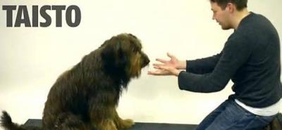 Vea la reacción de los perros ante un truco de magia