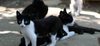 Convierten parque de Bucaramanga en albergue de gatos abandonados