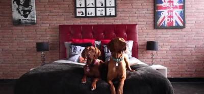 Conozca el primer hotel cinco estrellas para perros