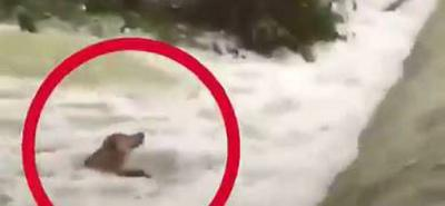 Rescatan perro que se ahogaba en río de México