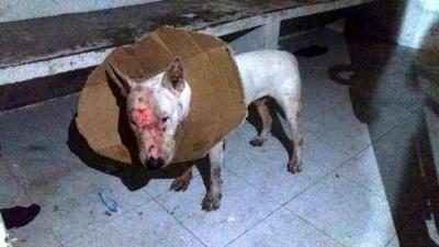Imágenes del rescate del perro herido en pelea de pandillas en Lebrija