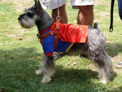 Con concurso canino de disfraces, ayudarán a refugios en Bucaramanga